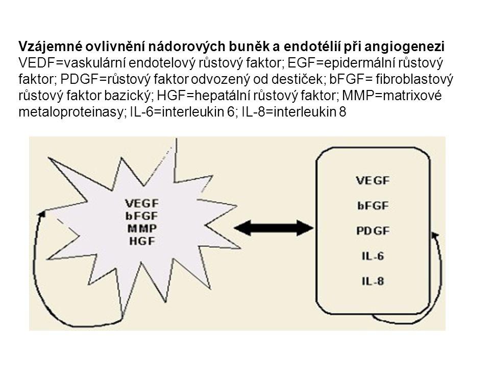 Vzájemné ovlivnění nádorových buněk a endotélií při angiogenezi VEDF=vaskulární endotelový růstový faktor; EGF=epidermální růstový faktor; PDGF=růstov