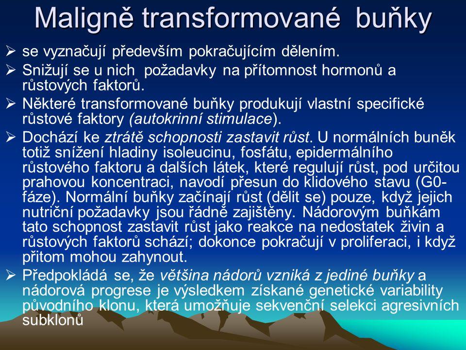 Maligně transformované buňky  se vyznačují především pokračujícím dělením.  Snižují se u nich požadavky na přítomnost hormonů a růstových faktorů. 