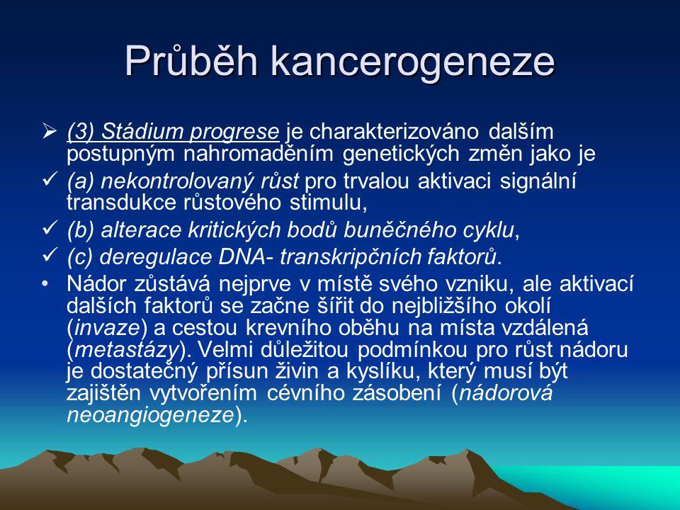 Průběh kancerogeneze  (3) Stádium progrese je charakterizováno dalším postupným nahromaděním genetických změn jako je (a) nekontrolovaný růst pro trv