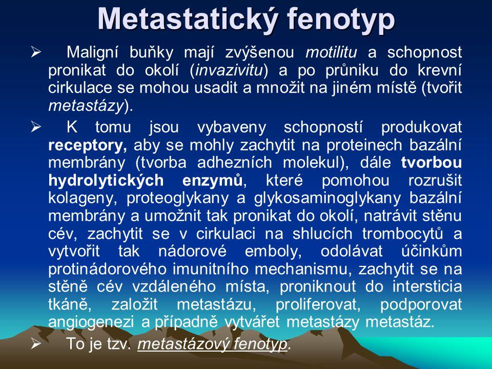 Metastatický fenotyp  Maligní buňky mají zvýšenou motilitu a schopnost pronikat do okolí (invazivitu) a po průniku do krevní cirkulace se mohou usadi