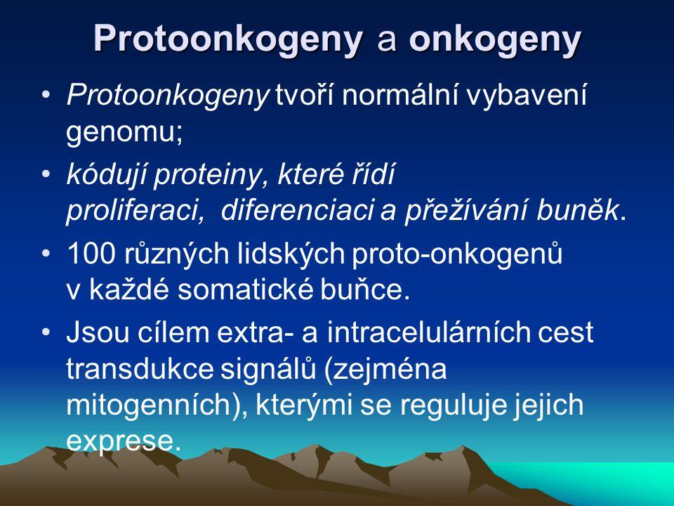 Protoonkogeny a onkogeny Protoonkogeny tvoří normální vybavení genomu; kódují proteiny, které řídí proliferaci, diferenciaci a přežívání buněk. 100 rů