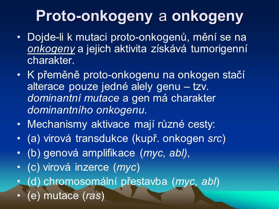 Proto-onkogeny a onkogeny Dojde-li k mutaci proto-onkogenů, mění se na onkogeny a jejich aktivita získává tumorigenní charakter. K přeměně proto-onkog