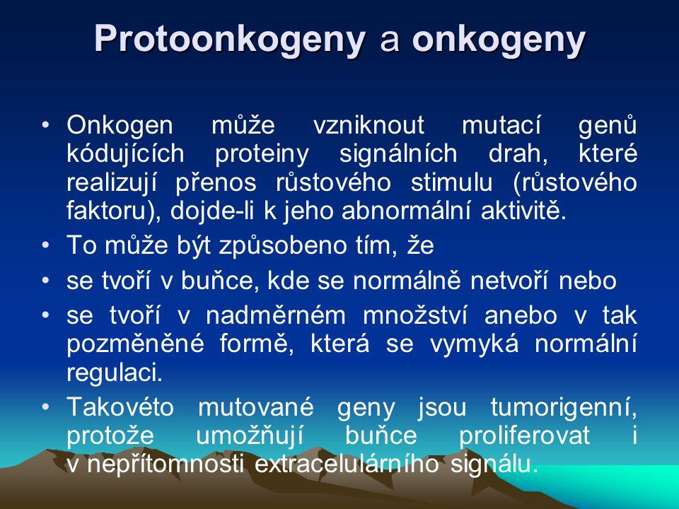 Protoonkogeny a onkogeny Onkogen může vzniknout mutací genů kódujících proteiny signálních drah, které realizují přenos růstového stimulu (růstového f