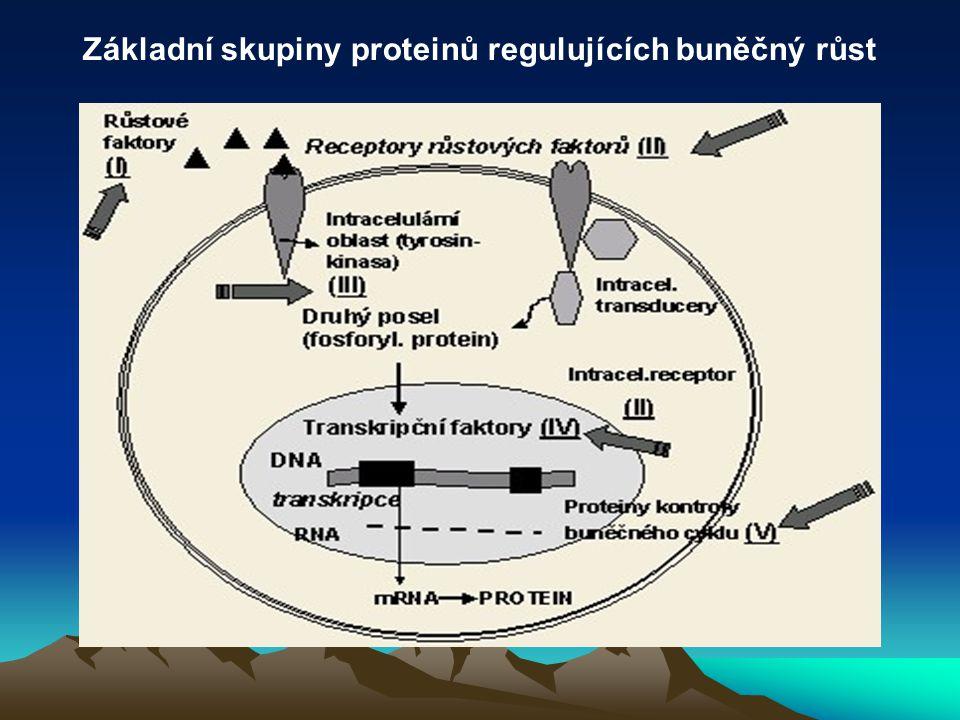 Základní skupiny proteinů regulujících buněčný růst