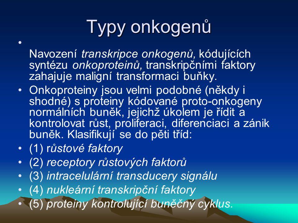 Typy onkogenů Navození transkripce onkogenů, kódujících syntézu onkoproteinů, transkripčními faktory zahajuje maligní transformaci buňky. Onkoproteiny