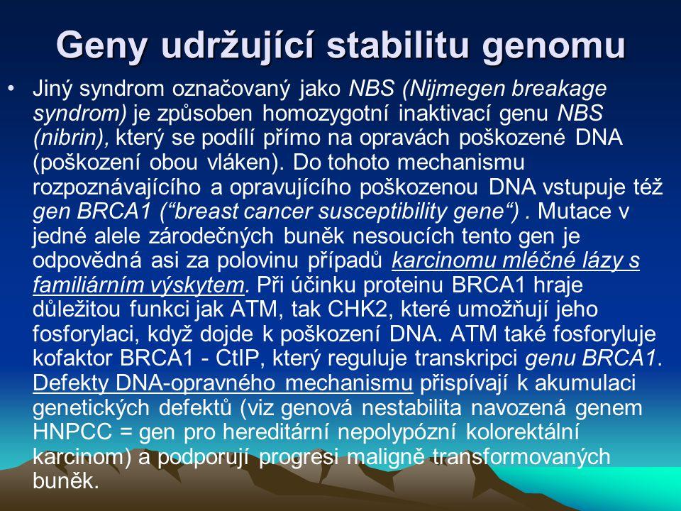 Geny udržující stabilitu genomu Jiný syndrom označovaný jako NBS (Nijmegen breakage syndrom) je způsoben homozygotní inaktivací genu NBS (nibrin), kte