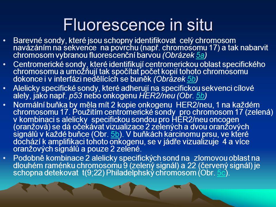 Fluorescence in situ Barevné sondy, které jsou schopny identifikovat celý chromosom navázáním na sekvence na povrchu (např. chromosomu 17) a tak nabar