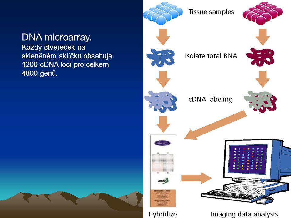 DNA microarray. Každý čtvereček na skleněném sklíčku obsahuje 1200 cDNA loci pro celkem 4800 genů.