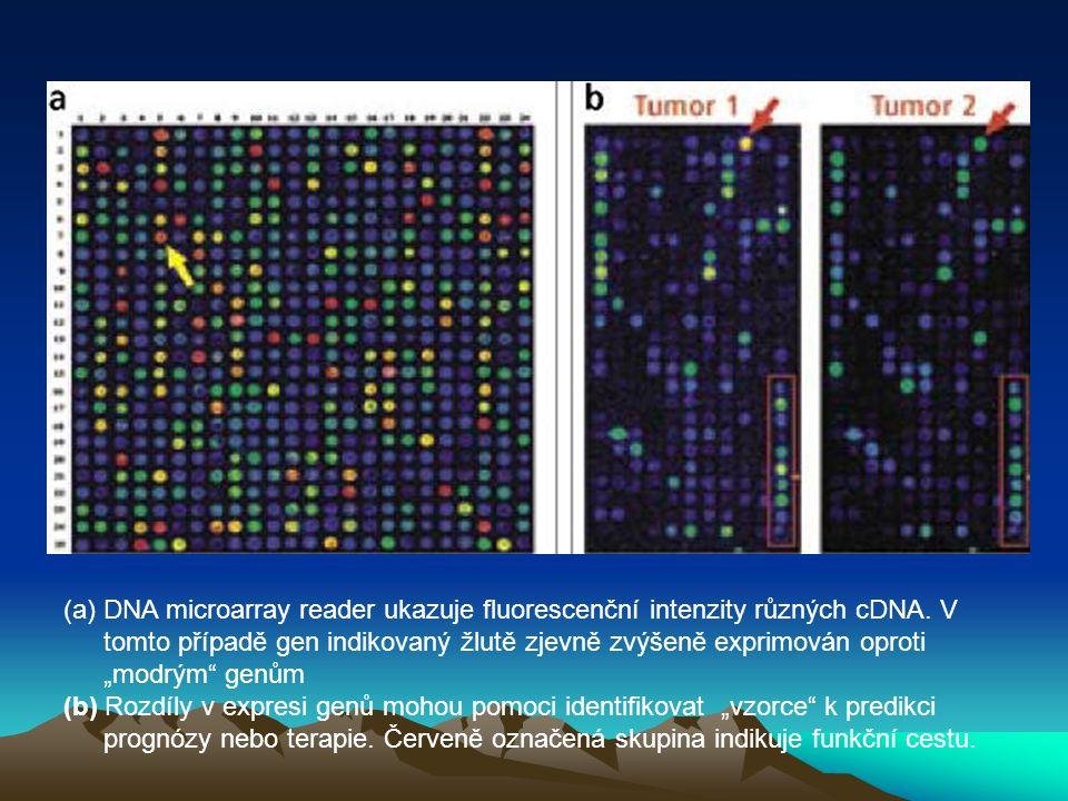 """(a)DNA microarray reader ukazuje fluorescenční intenzity různých cDNA. V tomto případě gen indikovaný žlutě zjevně zvýšeně exprimován oproti """"modrým"""""""