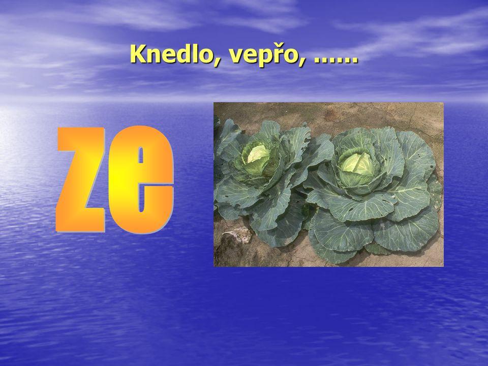V naší třídě se sešlo několik dětí, jejichž jméno začíná na písmeno Z: Zbyšek Zikmund Zuzanka Zdena Zita Zbyněk