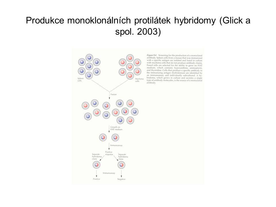 Produkce monoklonálních protilátek hybridomy (Glick a spol. 2003)
