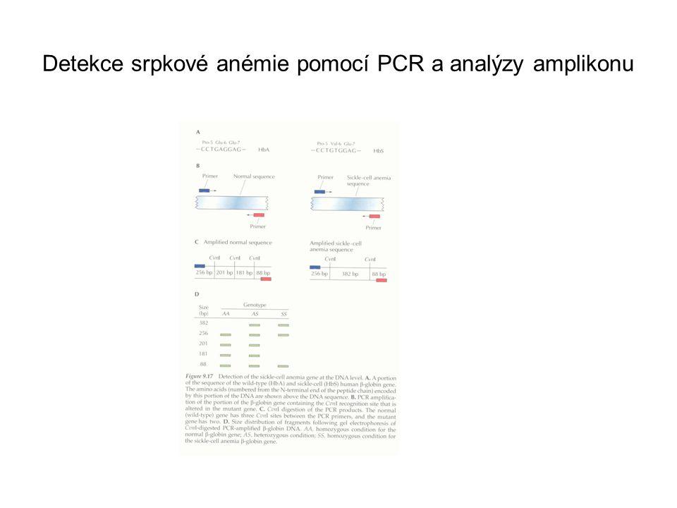 Detekce srpkové anémie pomocí PCR a analýzy amplikonu