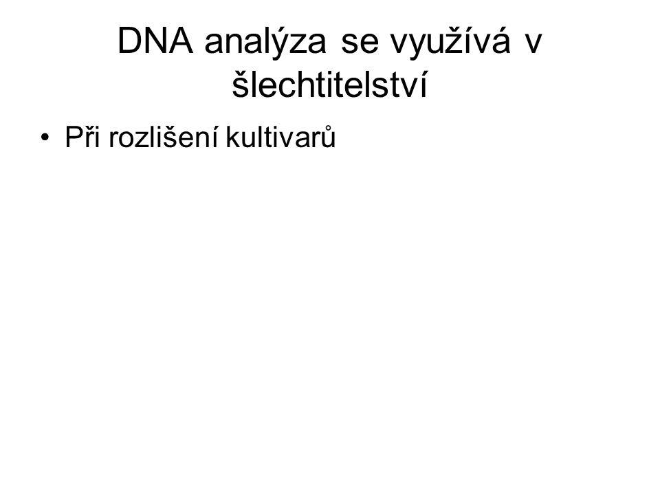 DNA analýza se využívá v šlechtitelství Při rozlišení kultivarů