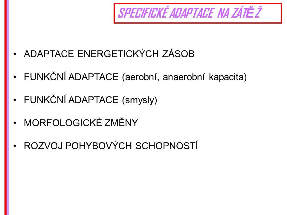 SPECIFICKÉ ADAPTACE NA ZÁT Ě Ž ADAPTACE ENERGETICKÝCH ZÁSOB FUNKČNÍ ADAPTACE (aerobní, anaerobní kapacita) FUNKČNÍ ADAPTACE (smysly) MORFOLOGICKÉ ZMĚNY ROZVOJ POHYBOVÝCH SCHOPNOSTÍ