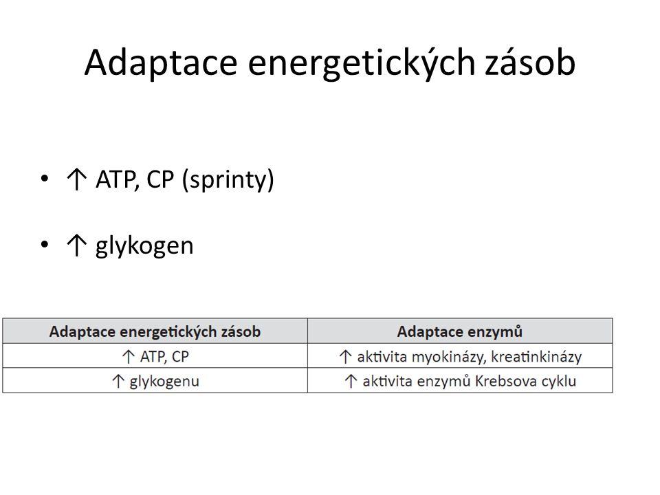 Adaptace energetických zásob ↑ ATP, CP (sprinty) ↑ glykogen