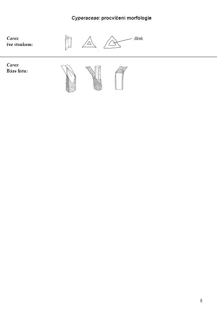 Carex řez stonkem: Carex Báze listu: dřeň Cyperaceae: procvičení morfologie 8