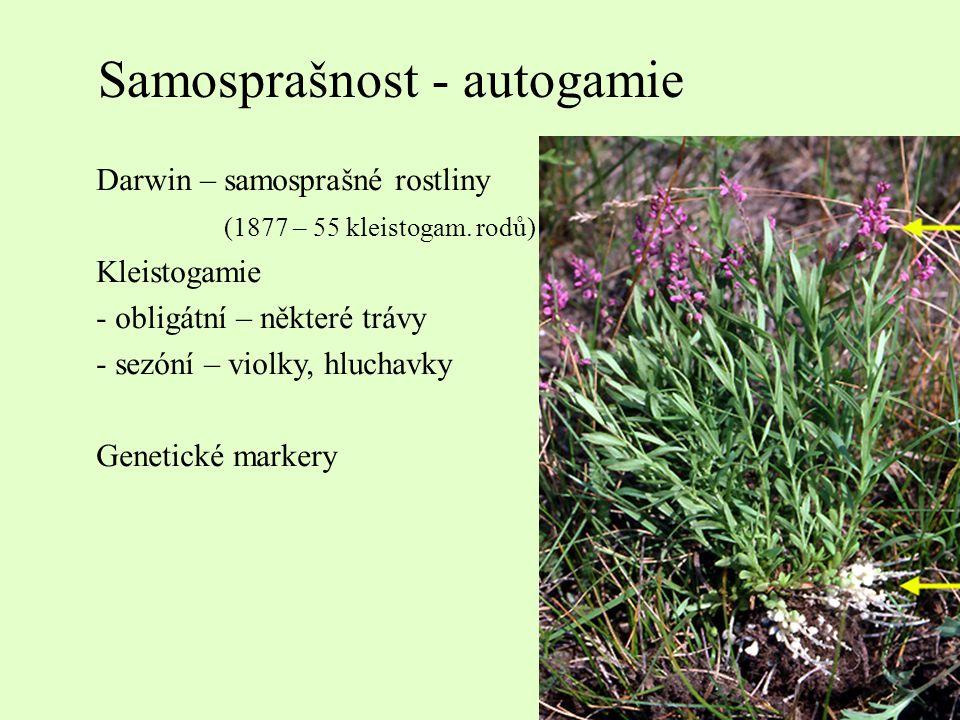 Samosprašnost - autogamie Darwin – samosprašné rostliny (1877 – 55 kleistogam. rodů) Kleistogamie - obligátní – některé trávy - sezóní – violky, hluch