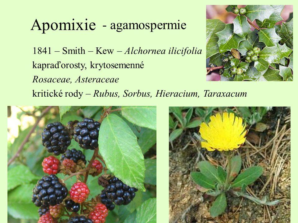 Apomixie - agamospermie 1841 – Smith – Kew – Alchornea ilicifolia kapraďorosty, krytosemenné Rosaceae, Asteraceae kritické rody – Rubus, Sorbus, Hiera