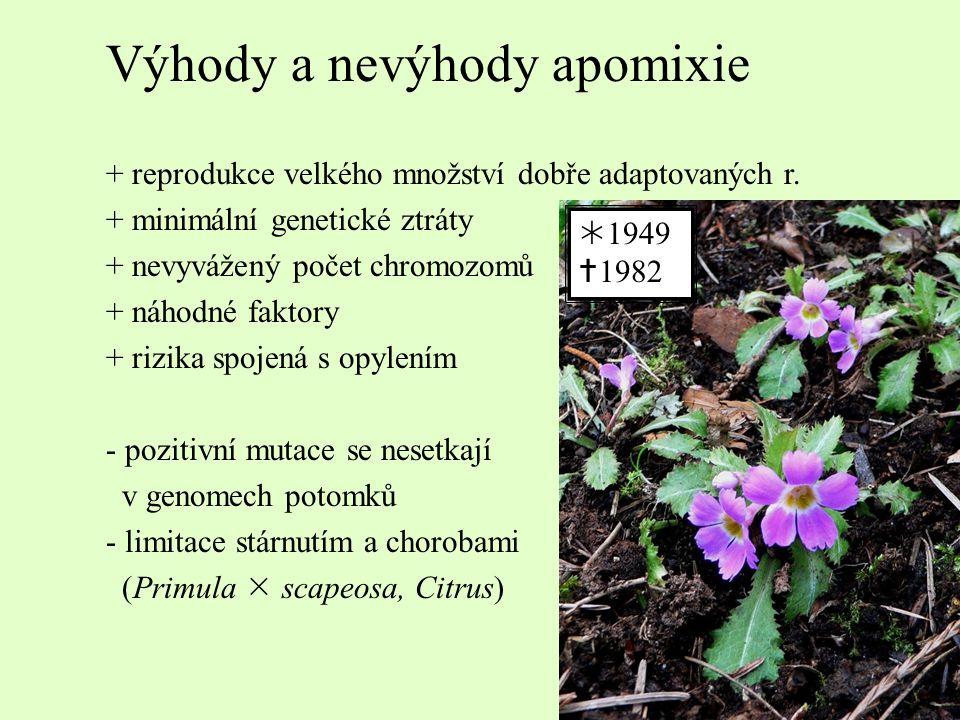 Výhody a nevýhody apomixie + reprodukce velkého množství dobře adaptovaných r. + minimální genetické ztráty + nevyvážený počet chromozomů + náhodné fa