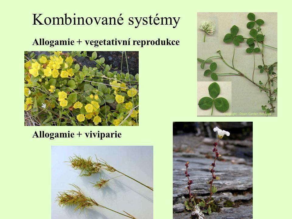 Kombinované systémy Allogamie + vegetativní reprodukce Allogamie + viviparie