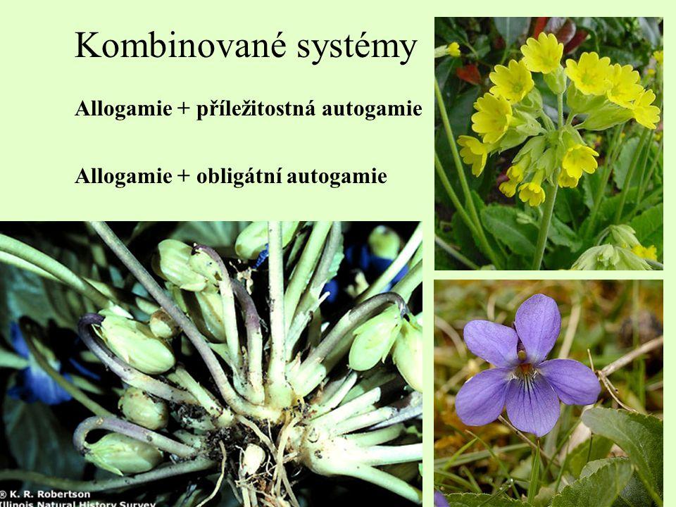 Kombinované systémy Allogamie + příležitostná autogamie Allogamie + obligátní autogamie