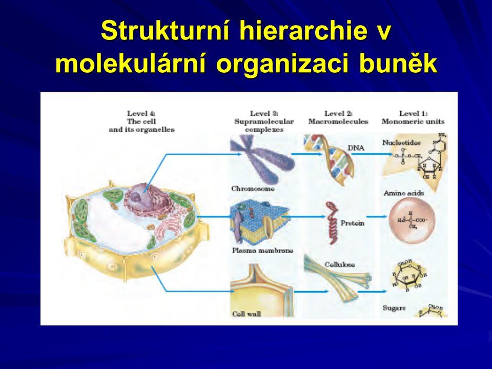 Strukturní hierarchie v molekulární organizaci buněk