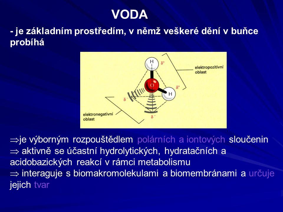 VODA - je základním prostředím, v němž veškeré dění v buňce probíhá  je výborným rozpouštědlem polárních a iontových sloučenin  aktivně se účastní hydrolytických, hydratačních a acidobazických reakcí v rámci metabolismu  interaguje s biomakromolekulami a biomembránami a určuje jejich tvar
