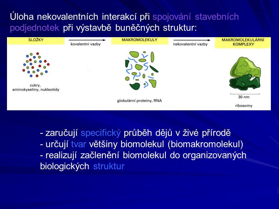 Úloha nekovalentních interakcí při spojování stavebních podjednotek při výstavbě buněčných struktur: - zaručují specifický průběh dějů v živé přírodě - určují tvar většiny biomolekul (biomakromolekul) - realizují začlenění biomolekul do organizovaných biologických struktur