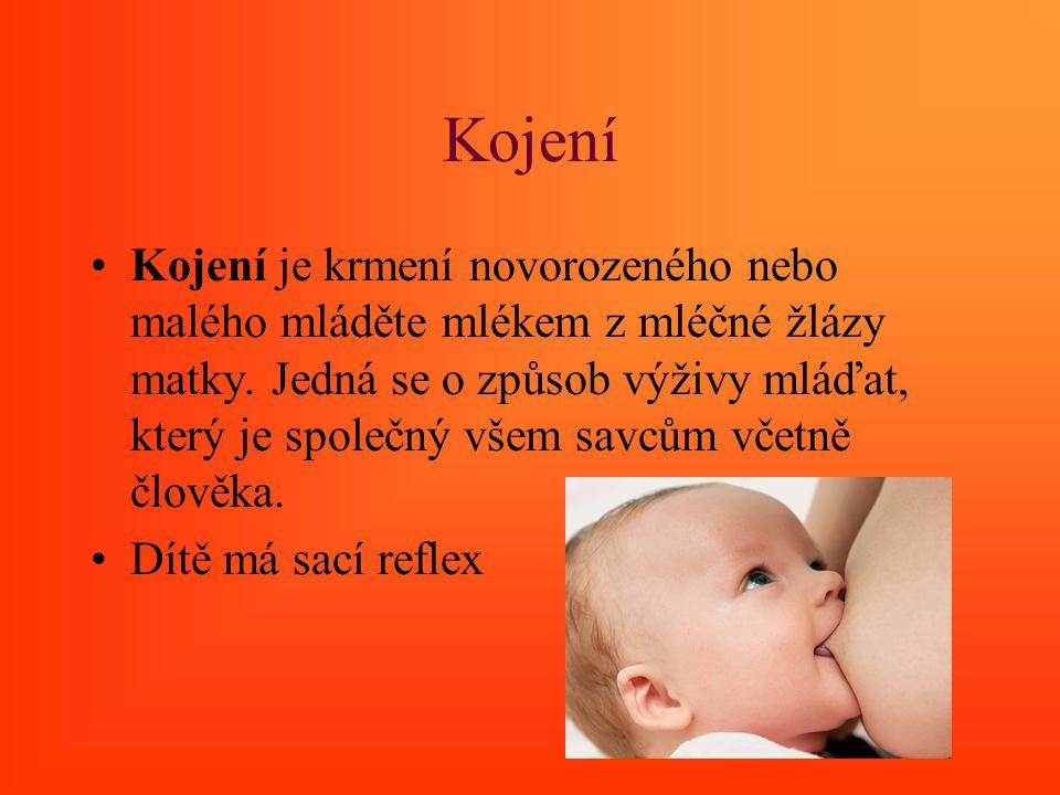 Kojení Kojení je krmení novorozeného nebo malého mláděte mlékem z mléčné žlázy matky. Jedná se o způsob výživy mláďat, který je společný všem savcům v