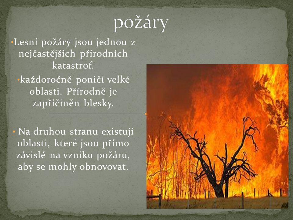 Lesní požáry jsou jednou z nejčastějších přírodních katastrof.