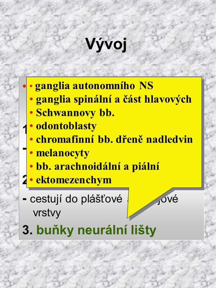Vývoj diferenciace buněk neuroepitelu 1. nervové buňky - neuroblasty,  jádro, přechodný dendrit; a-, bi-, multipolární 2. gliové buňky - cestují do p