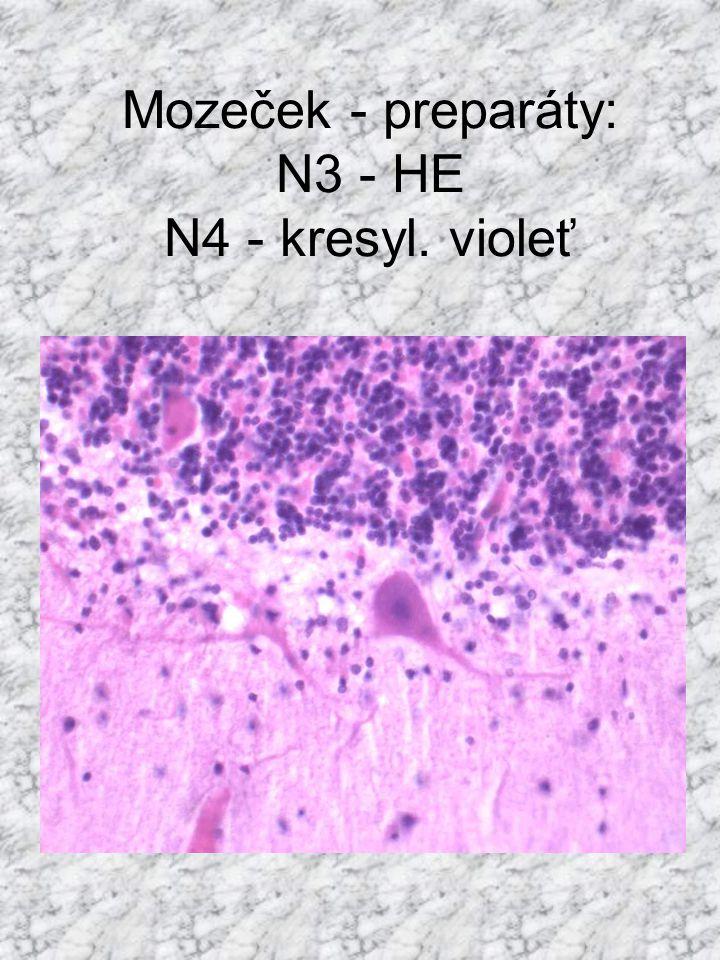 Mozeček - preparáty: N3 - HE N4 - kresyl. violeť