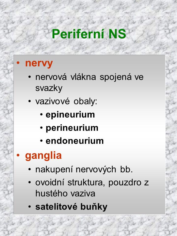 nervy nervová vlákna spojená ve svazky vazivové obaly: epineurium perineurium endoneurium ganglia nakupení nervových bb. ovoidní struktura, pouzdro z