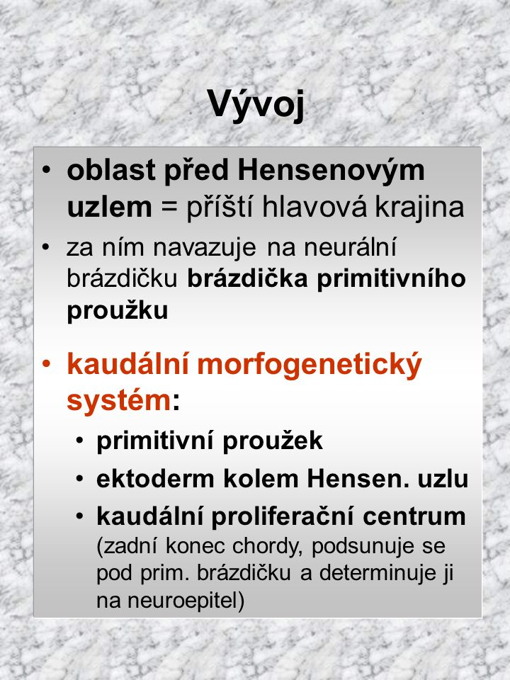 Vývoj oblast před Hensenovým uzlem = příští hlavová krajina za ním navazuje na neurální brázdičku brázdička primitivního proužku kaudální morfogenetic