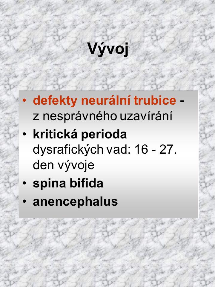 Vývoj defekty neurální trubice - z nesprávného uzavírání kritická perioda dysrafických vad: 16 - 27. den vývoje spina bifida anencephalus