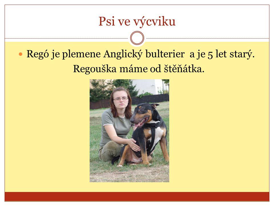 Psi ve výcviku Regó je plemene Anglický bulterier a je 5 let starý. Regouška máme od štěňátka.