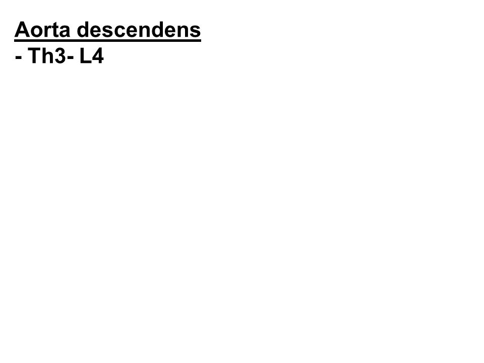 Aorta descendens - Th3- L4