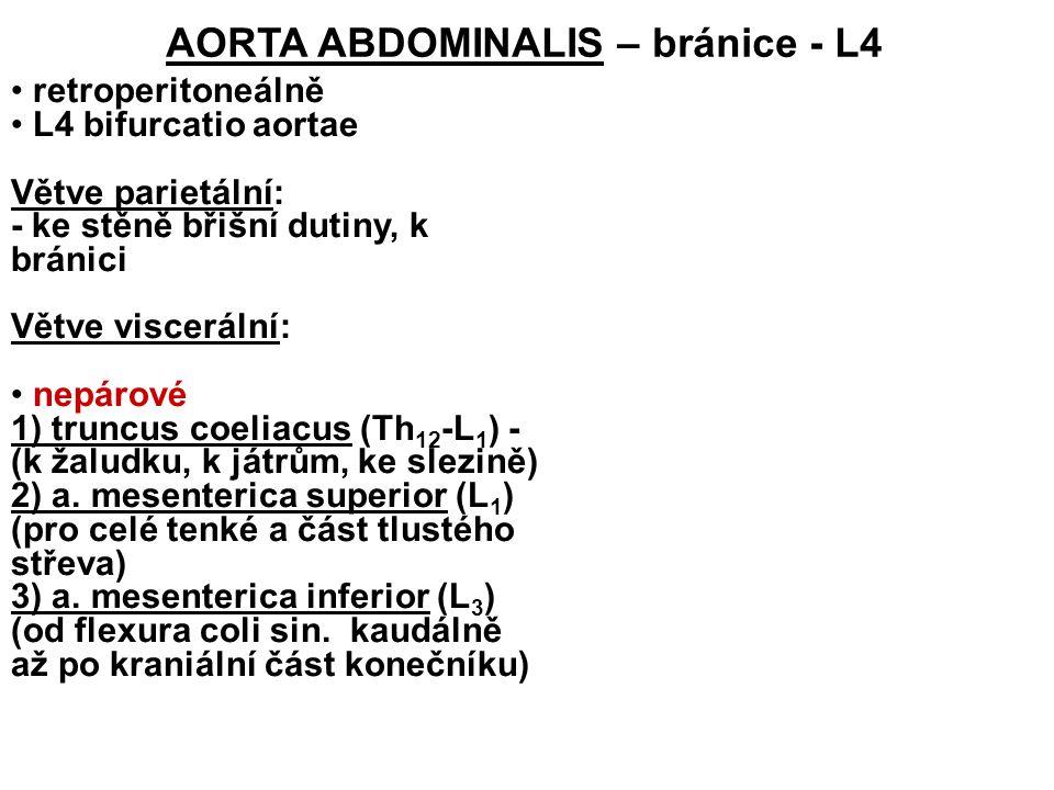 retroperitoneálně L4 bifurcatio aortae Větve parietální: - ke stěně břišní dutiny, k bránici Větve viscerální: nepárové 1) truncus coeliacus (Th 12 -L