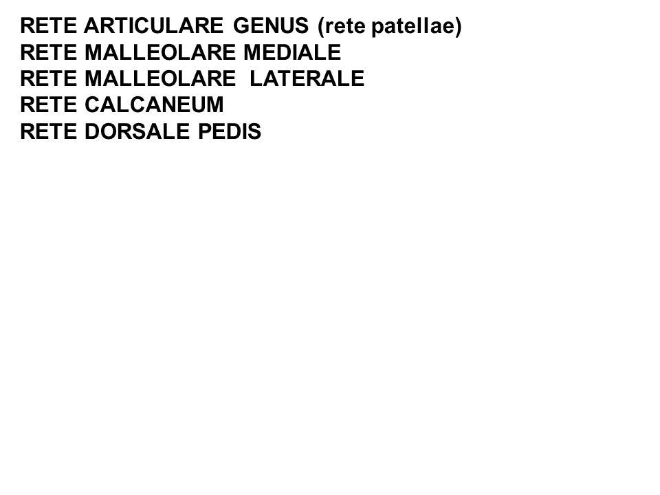 RETE ARTICULARE GENUS (rete patellae) RETE MALLEOLARE MEDIALE RETE MALLEOLARE LATERALE RETE CALCANEUM RETE DORSALE PEDIS