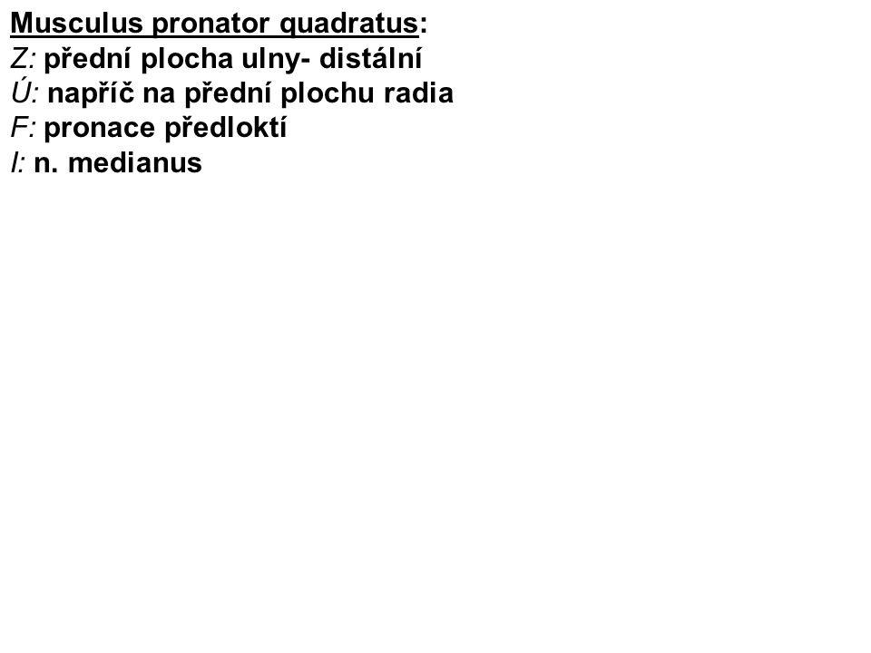 Musculus pronator quadratus: Z: přední plocha ulny- distální Ú: napříč na přední plochu radia F: pronace předloktí I: n. medianus