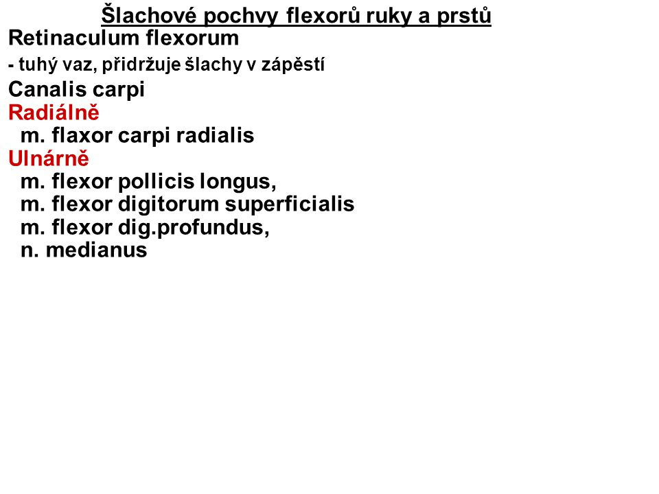 Šlachové pochvy flexorů ruky a prstů Retinaculum flexorum - tuhý vaz, přidržuje šlachy v zápěstí Canalis carpi Radiálně m. flaxor carpi radialis Ulnár