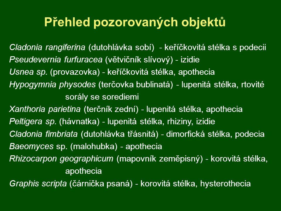 Přehled pozorovaných objektů Cladonia rangiferina (dutohlávka sobí) - keříčkovitá stélka s podecii Pseudevernia furfuracea (větvičník slívový) - izidi