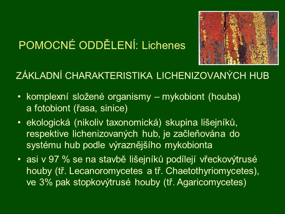 ZÁKLADNÍ CHARAKTERISTIKA LICHENIZOVANÝCH HUB POMOCNÉ ODDĚLENÍ: Lichenes komplexní složené organismy – mykobiont (houba) a fotobiont (řasa, sinice) eko
