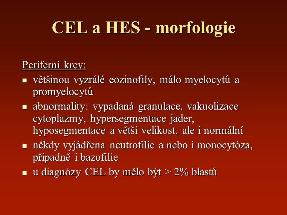CEL a HES - morfologie Periferní krev: většinou vyzrálé eozinofily, málo myelocytů a promyelocytů většinou vyzrálé eozinofily, málo myelocytů a promye