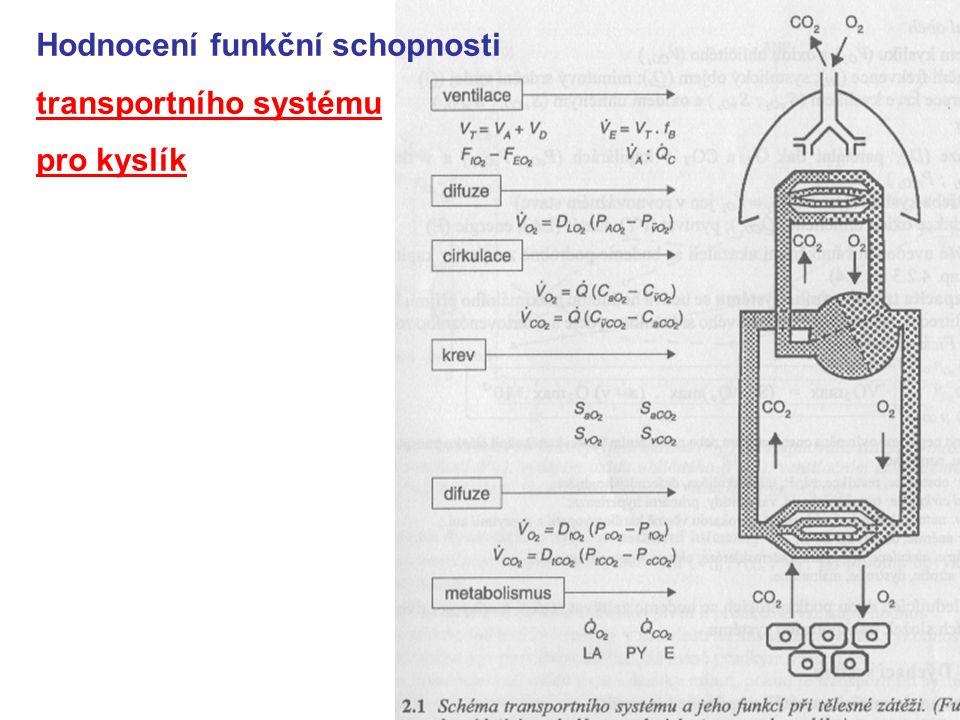 Hodnocení funkční schopnosti transportního systému pro kyslík
