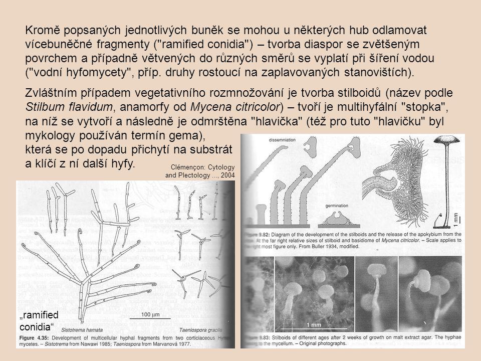 Kromě popsaných jednotlivých buněk se mohou u některých hub odlamovat vícebuněčné fragmenty ( ramified conidia ) – tvorba diaspor se zvětšeným povrchem a případně větvených do různých směrů se vyplatí při šíření vodou ( vodní hyfomycety , příp.