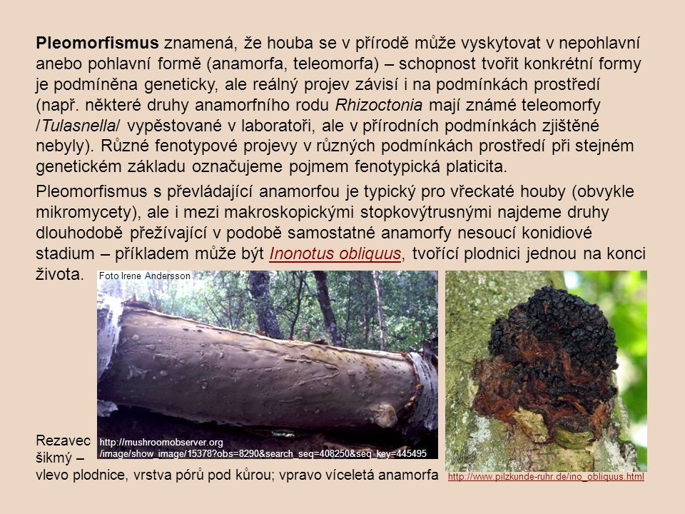 Pleomorfismus znamená, že houba se v přírodě může vyskytovat v nepohlavní anebo pohlavní formě (anamorfa, teleomorfa) – schopnost tvořit konkrétní for