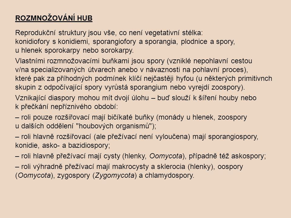 ROZMNOŽOVÁNÍ HUB Reprodukční struktury jsou vše, co není vegetativní stélka: konidiofory s konidiemi, sporangiofory a sporangia, plodnice a spory, u hlenek sporokarpy nebo sorokarpy.