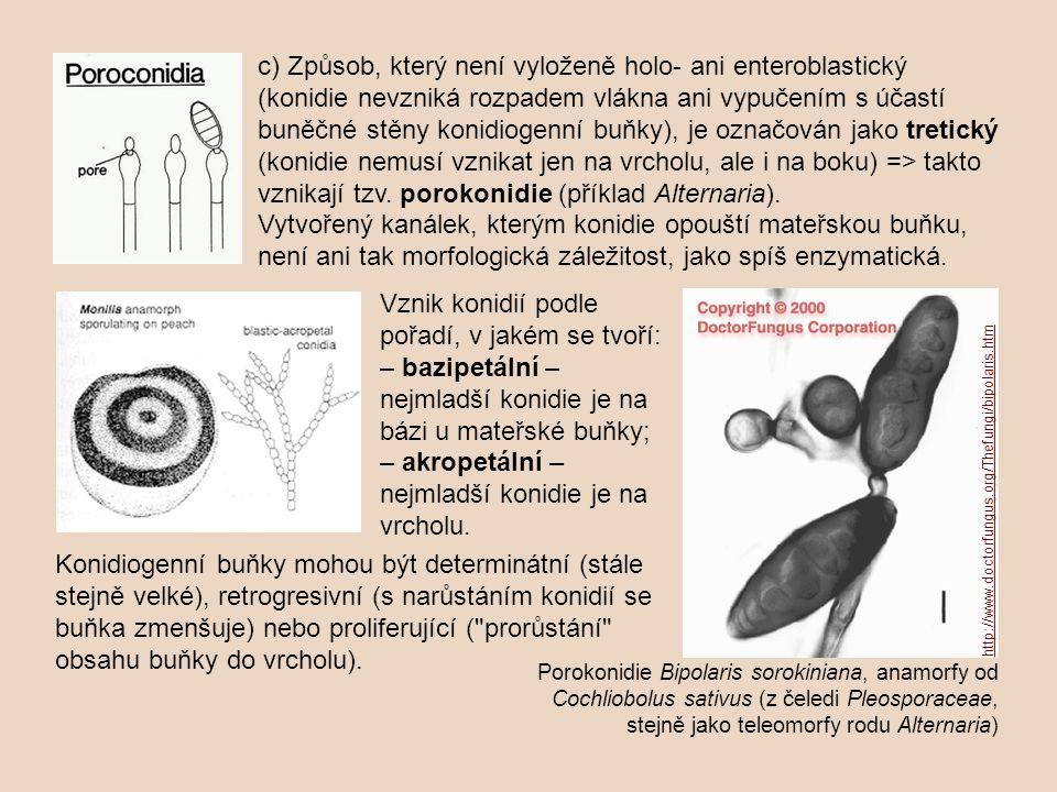 Vznik konidií podle pořadí, v jakém se tvoří: – bazipetální – nejmladší konidie je na bázi u mateřské buňky; – akropetální – nejmladší konidie je na v