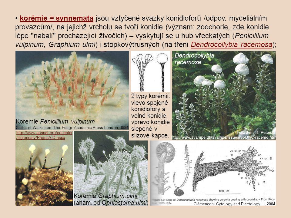 korémie = synnemata jsou vztyčené svazky konidioforů /odpov. myceliálním provazcům/, na jejichž vrcholu se tvoří konidie (význam: zoochorie, zde konid